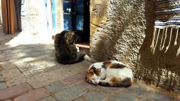 Überall dürfen Katzen sein
