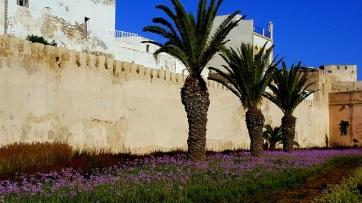 Essaouira Palmen2
