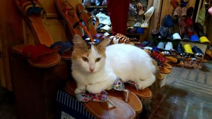 Katze Souk Rabat