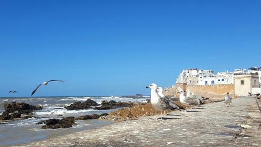Essaouira Möwen und Mauer