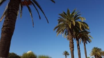 Rabat Palmen 1