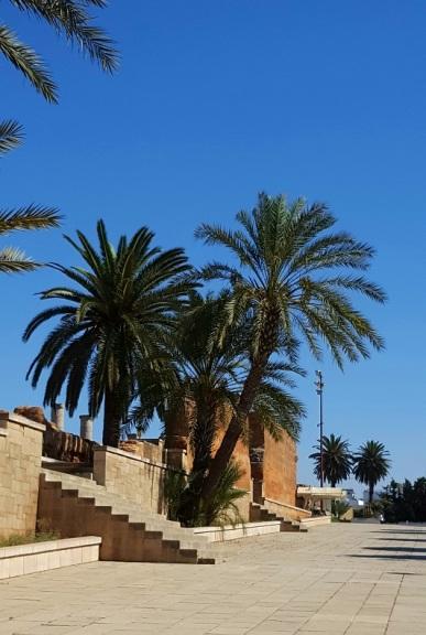 Rabat Palmen 2