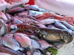 Essaouira Hafen Fische