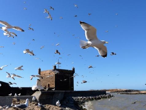 Essaouira Hafen mit Möwen