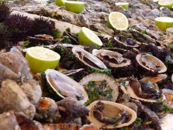 Essaouira Hafen Muscheln 2