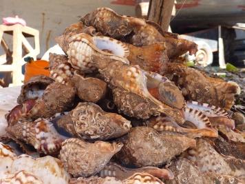 Essaouira Hafen Muscheln
