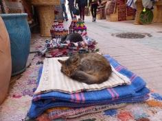 Essaouira Katzen