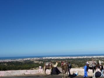 Essaouira mit Camelen
