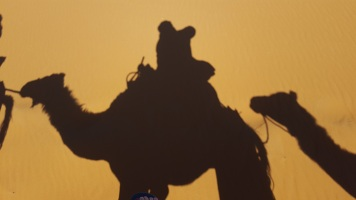 Kamel Schatten 2