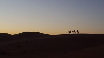 Karawane auf Düne