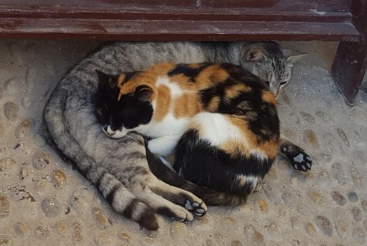 Katzen kuscheln