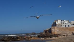 Möwen Essauoira