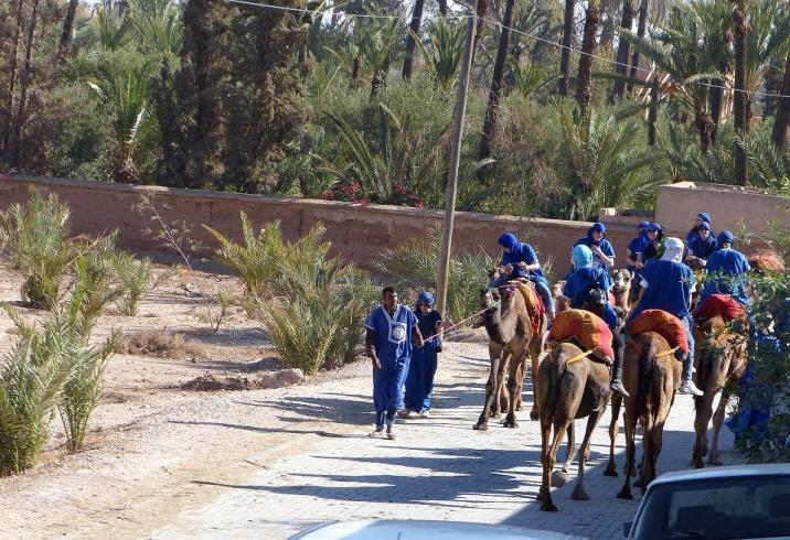 Marrakesch Kamele Berber