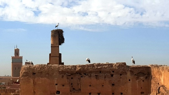Störche und Minarett