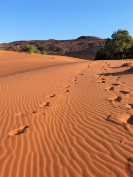 Erg Chebbi Spuren im Sand
