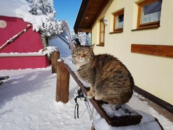 Katze des Hauses