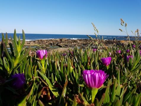 002 Meer und Blumen