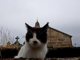 01 Katze vor Padrón