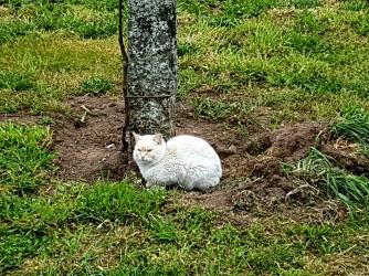 04 Katze