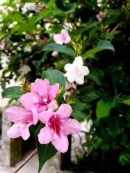 14 Blüten