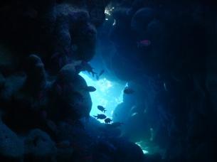 Höhle mit Glotzaugenfischen