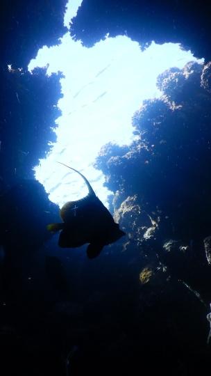 Höhle mit Wimpelfisch